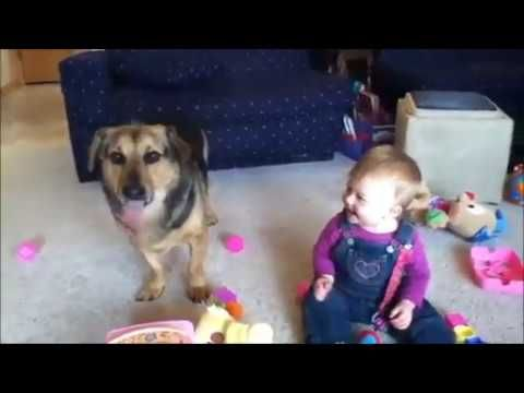 baby funny clips with animal