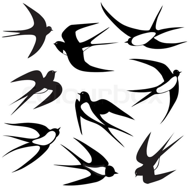 Bird swallow set. Vector illustration poses isolated on white. | Vector | Colourbox on Colourbox