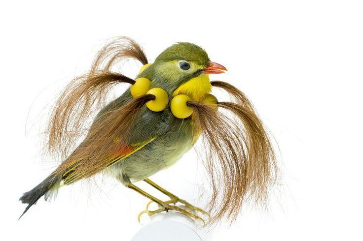 Burung cantik 5 (Karleyfeaver.com)