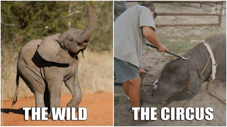 about Circus Animal Ab...