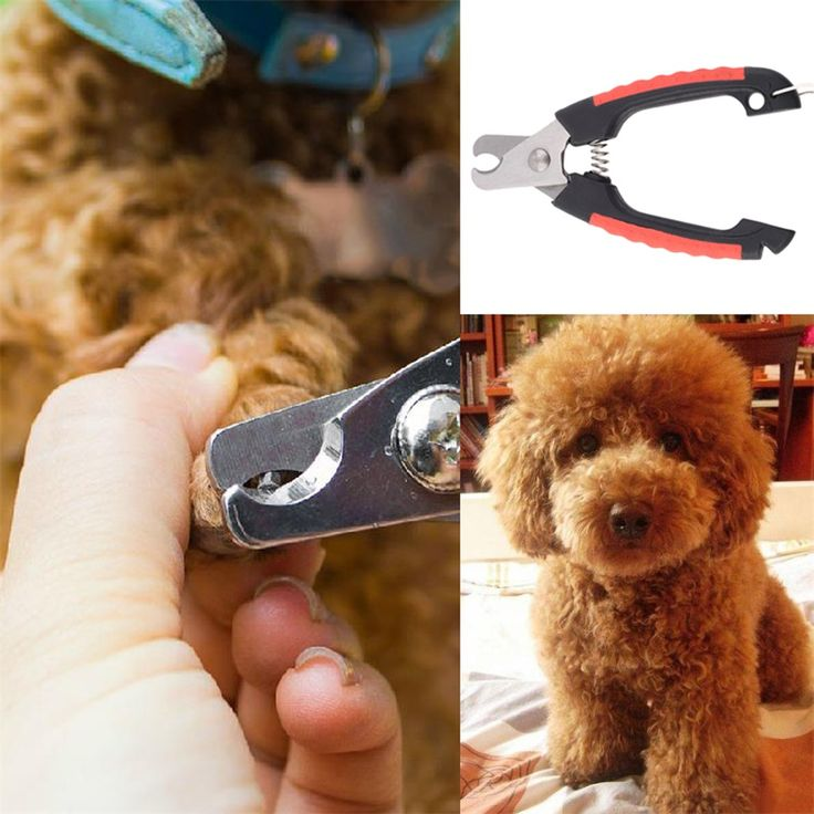 Hot Hot Dog Cat Puppy Pet Nail Toe Clipper Grooming Claw Cutter Trimmer Scissors New #clothing,#shoes,#jewelry,#women,#men,#hats,#watches,#belts,#fashion,#style