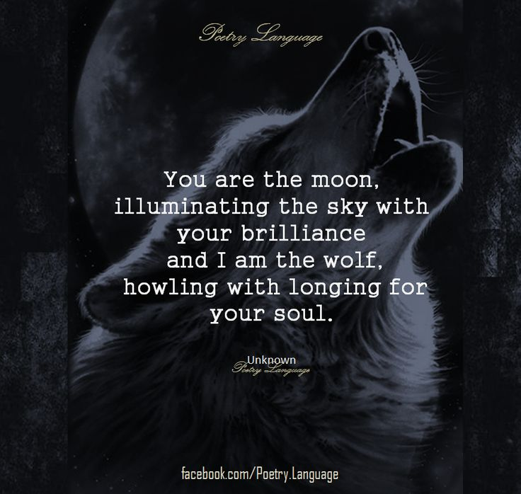 You are the moon, illuminating the sky with your brilliance and I am the wolf, howling with the longing for your soul.
