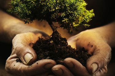 important of trees in our life in hindi Here are some simple ways kids can help save trees  but perhaps most  important, forests provide us with oxygen and ensure that the earth's  our  favorite way to pay homage to trees and forests is to spend time with them.