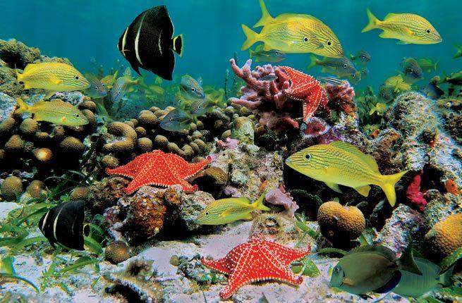Snorkeling - Aruba's Top 12 Experiences | Fodor's Travel