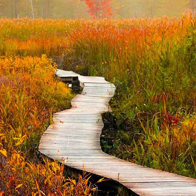 White Memorial Foundation is Connecticut's largest nature center and wildlife sanctuary (4,000 acres!) with over 35 miles of trails and a beautiful boardwalk through the bog.