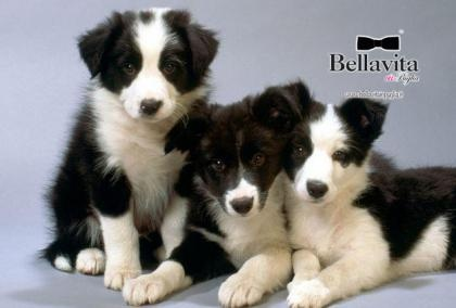 http://www.bellavitainpuglia.net/deals/9-90-euro-invece-di-20-euro-per-spa-e-relax-da-beauty-dog-spa-a-barletta_2225.html