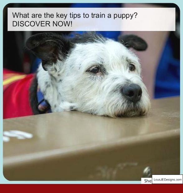 Tips On Toilet Training Dogs And Pics Of How To Train Your Dog Not