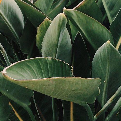 Green life 🌱🌴🍃 Lubimy otaczać się zielenią i żeby służyła nam jak najdłużej - dbamy o nią. Nasze modele szyjemy z poszanowaniem środowiska, co wpływa na ich ilość, jakość i cenę. Kupując rzeczy z metką MLE, inwestujecie w rozwój polskich manufaktur 😊 #mlestyle #mlecollection #green #greenlife #fairtrade #greenclothes #highquality Source: jake-millers.tumblr.com