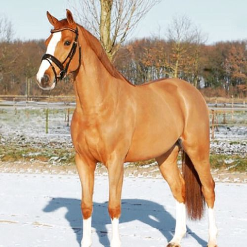The dun gene is a dilution gene that affects both red and black pigments in the coat color of a horse.