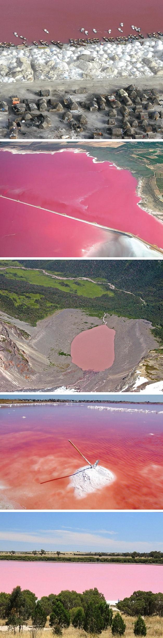 Pink lakes: Hille (Austrália), lago Retba (Senegal), Salina de Torrevieja (Espanha), Hutt Lagoon (Austrália), Dusty Rose (Canadá), Pink Lake (Austrália), Quairading Pink Lake (Austrália)