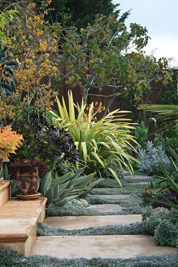 A vibrant garden filled with :Phormium,anigozanthos and Crassula,  carpeted with Dymondia margaretae & aloe