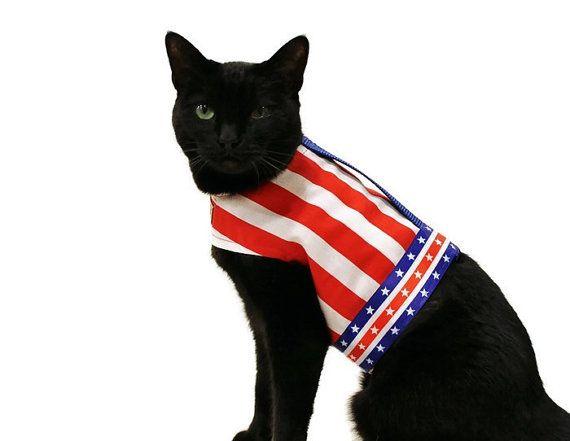 Kitty Holster Cat Harness Uk