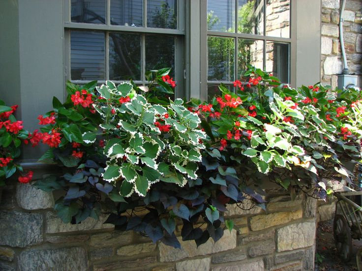 Window Box idea for the front boxes.