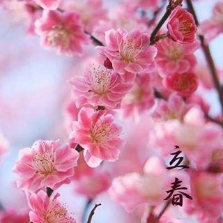 seimeijinja 本日2月4日は立春(りっしゅん)、二十四節気のひとつです。 「陽気地中に萌し東風氷を解く」と御祭神安倍晴明公秘伝平成二十九丁酉年本暦に書かれているように、暦の上では春。まだまだ油断できませんが、冬の厳しい寒さから徐々に解放されていきます。  当神社では、立春に晴明井の注ぎ口をその年の恵方に向けます。陰陽道では、その年の福徳を司る神「歳徳神(としとくじん) 」の在する方位を「恵方」としています。その方角に向かって事を行えば、万事に吉とされています。今年の方位は「北北西(正確には壬の方位)」です。  #seimeijinja #kyoto #晴明神社 #京都 #立春 #二十四節気 #恵方 #晴明井  2017/02/04 06:19:59