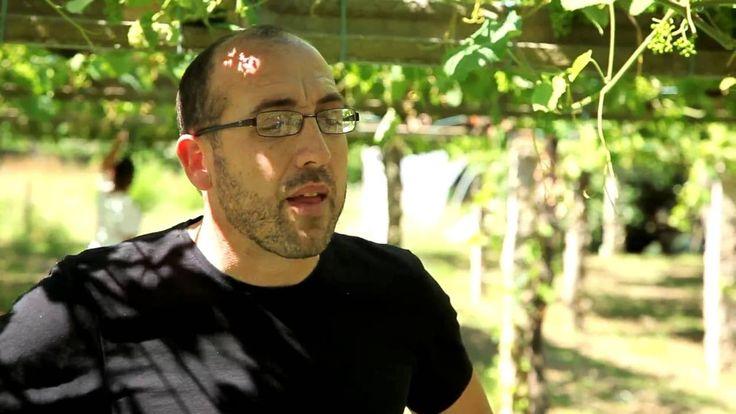 En el viñedos del que nace Organistrum, de Martín Códax  - Todovino