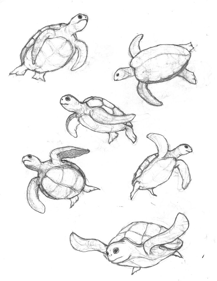 How To Draw A Sea Turtle Life drawing
