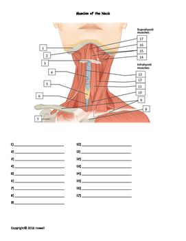 1000 images about anatomy identification for anatomy teachers and nursing students on pinterest. Black Bedroom Furniture Sets. Home Design Ideas