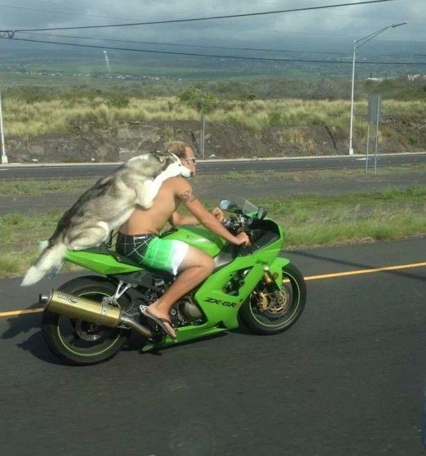 Due motociclisti ignorando leggi del casco, Immagini Divertenti
