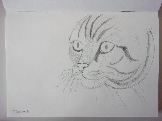 Cat sketching practice #001