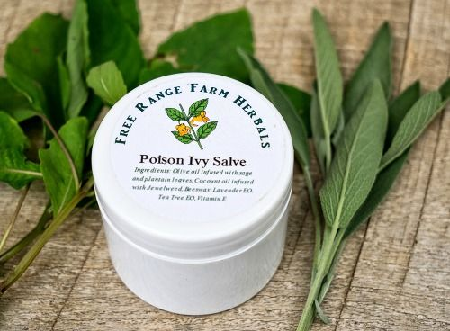 How to Make Poison Ivy Salve