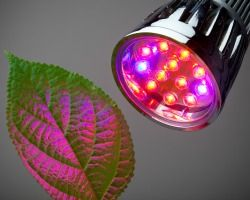 Grow lights 101: Help your indoor plants thrive #garden