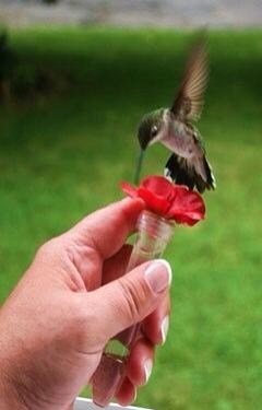 bird scare humming line instructions