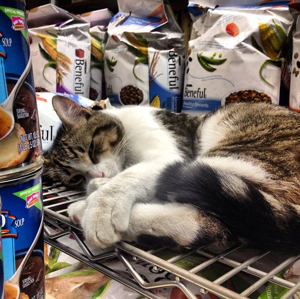 25 Places You'll Find Bodega Cats  Shout out to all the bodega cats of NYC. This post is for you.