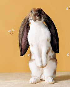 Bunnies with Marc Morrone - Martha Stewart Pets (Great intro. for those interested in pet bunnies)