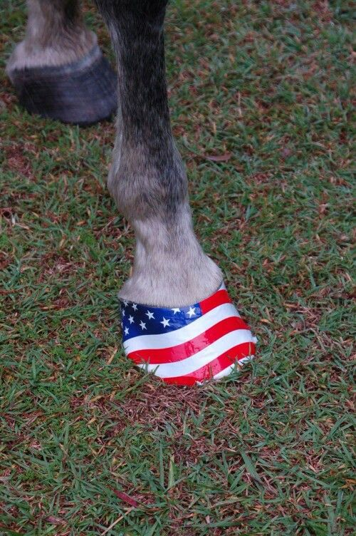 Great for 4th of July rodeo!