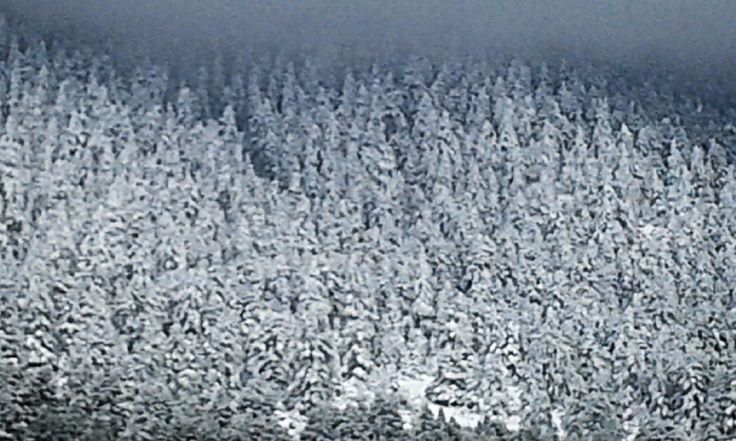 Winter♡