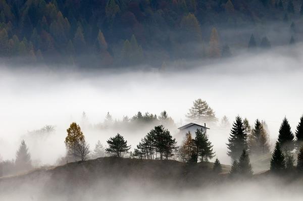 Luna veloce: le cime degli alberi sono impregnate di pioggia (Matsuo Basho)