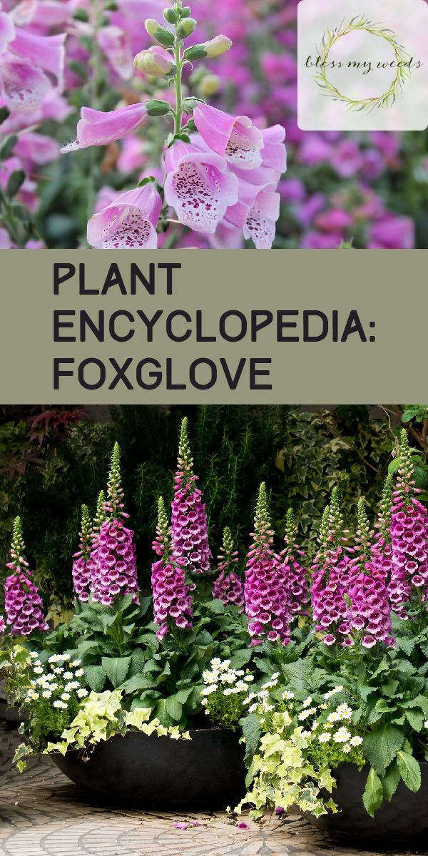 f6919d131b3ca32b56890c5712449499 - The Gardener's Encyclopedia Of Plants And Flowers
