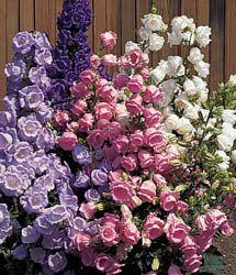 Flower Garden Ideas Colorado 38 best garden ideas images on pinterest   garden ideas, flowers