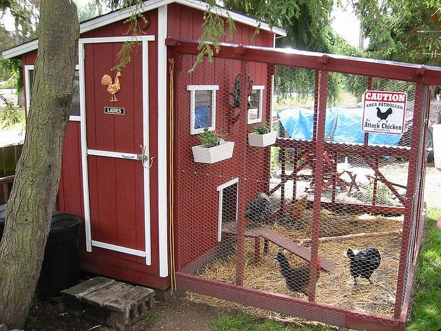 Nice Coop: Fresh Eggs, The Doors, Yard, Gardens Design Ideas, Chicken Running, Cute Chicken Coops, Chicken Coupe, Red Barns, Coops Ideas