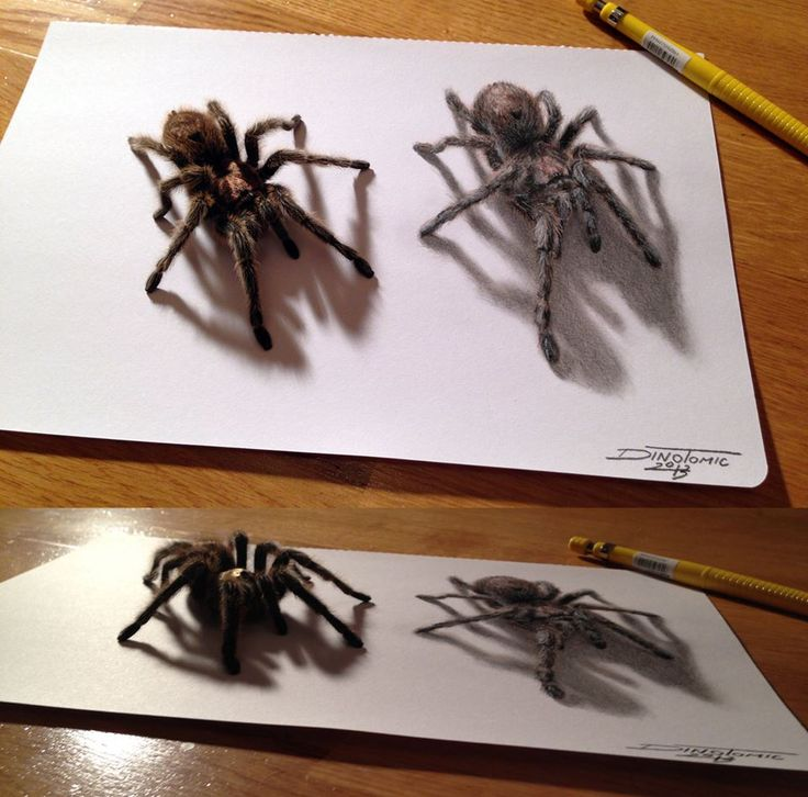 Detailed and super realistiic drawing of a spider