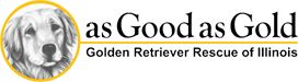 As Good As Gold – Golden Retriever Rescue of IllinoisAdopt a Golden Retriever from As Good as Gold