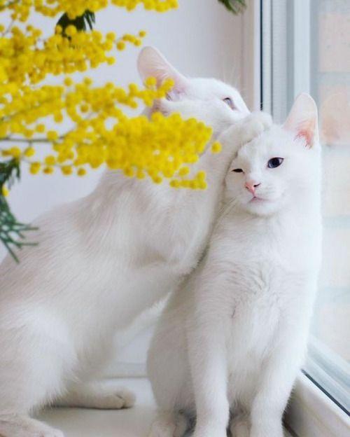 """uyesurana: """"charming cat love """""""