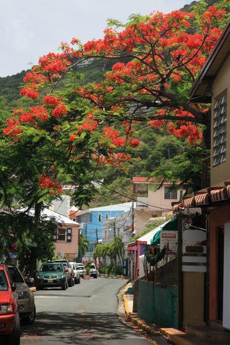 Road town in Tortola | BRITISH VIRGIN ISLANDS.  (by SunCat)