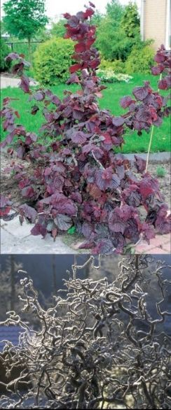 70 best images about yard  native plant ideas for pnw wildlife garden on pinterest