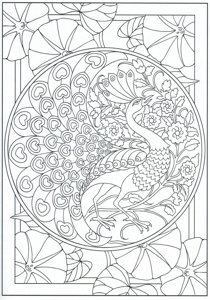 Peacock Coloring Page For Adults 11 31 Coloring Pages