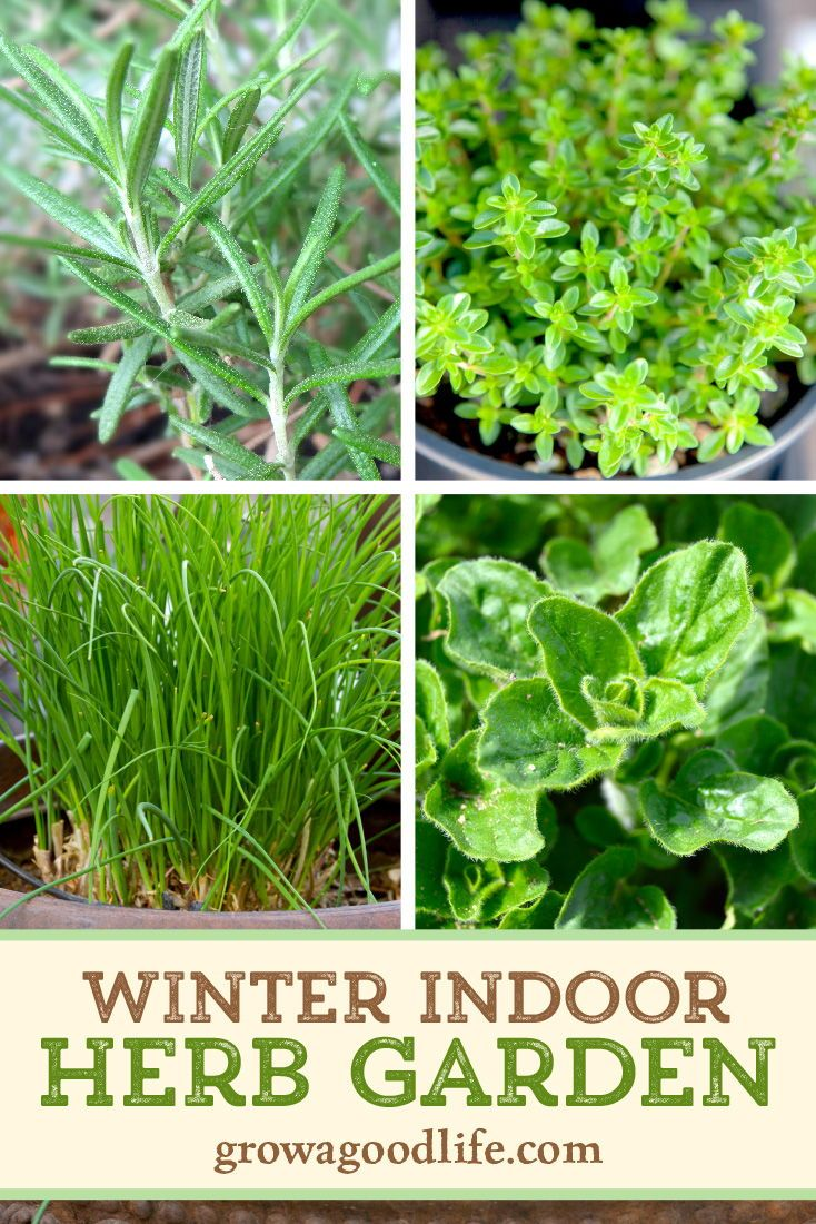 Grow Herbs Indoors 5 Herbs That Thrive Inside In 2020 Spring