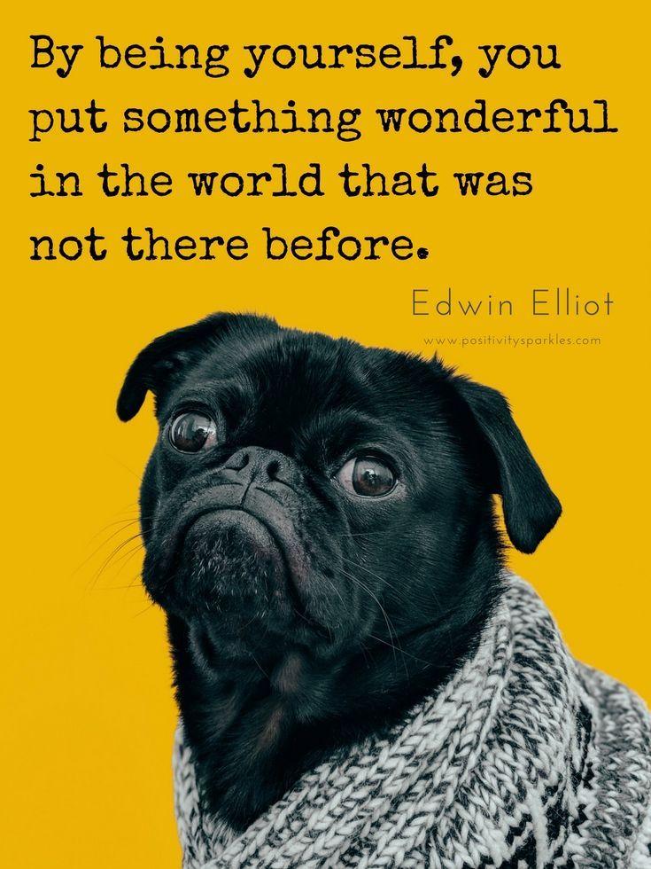 Life Quotes Positivity Sparkles Positive Mindset Positive Attitude Funny Dog Memes Dog Memes Funny Dogs