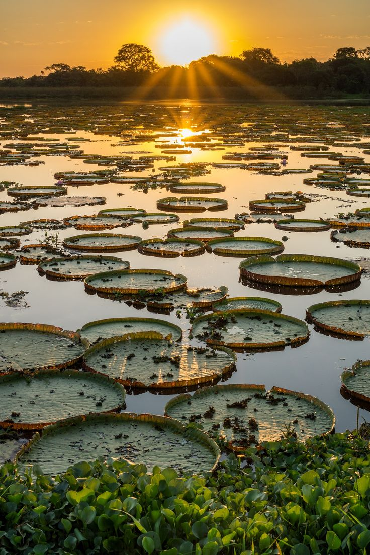 Bonito lies on the southern fringe of the Pantanal, a vast region the size of Great Britain that is one of the world's largest wetlands. Check out these amazing day trips from Bonito to the stunning wetlands!
