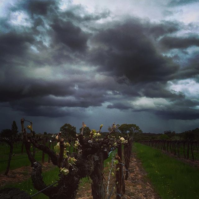 Think it might be time to bring the washing in...! #Barossa #BarossaDirt #Barossavalley #storm #spring #clouds #vineyard #winecountry #winery