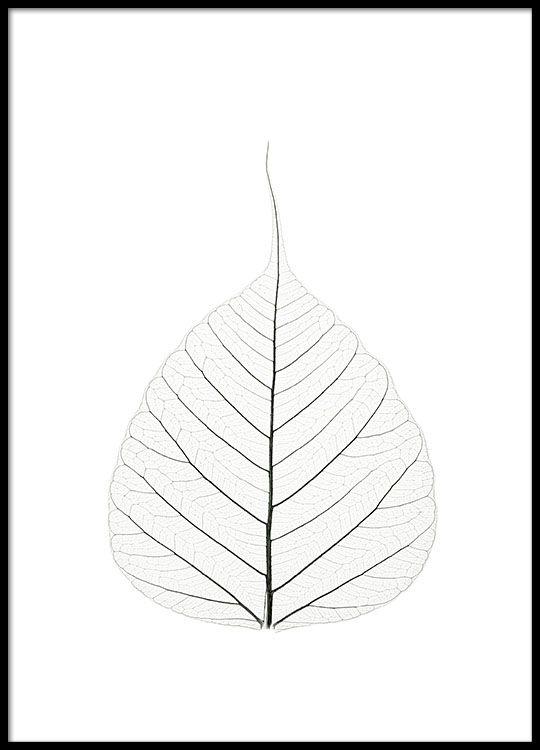 Botanik-Poster mit Pflanzenblatt, Fotokunst.