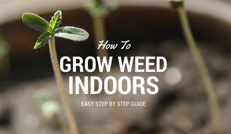 So you're sick of buying weed every single week and you just want to have some of your own to splurge on for a little while? Or maybe you're just looking to learn about the growth cycle of a weed plant? No matter the case, this step by step marijuana grow