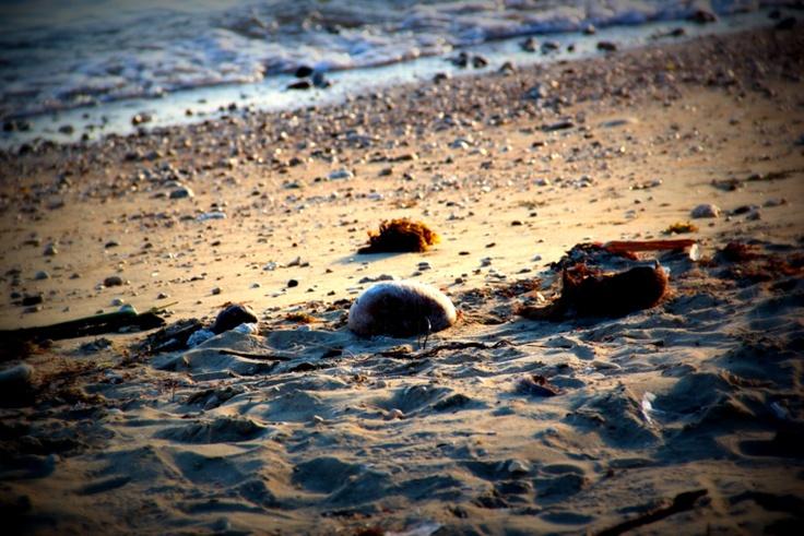 Valencia Beach, Bohol. http://kattasfikarum.blogspot.com/