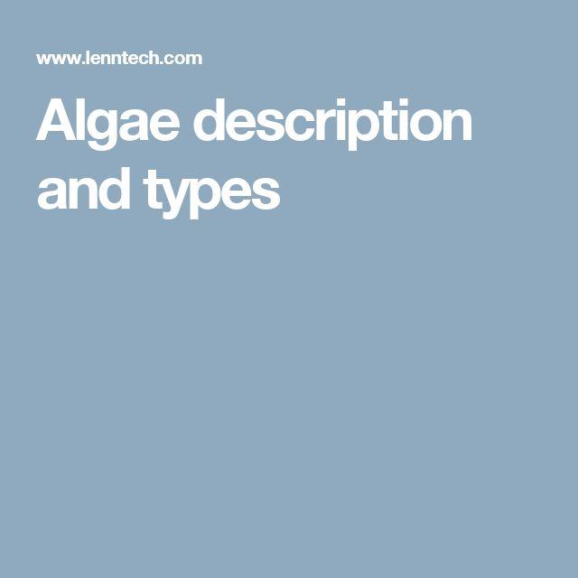 Algae description and types