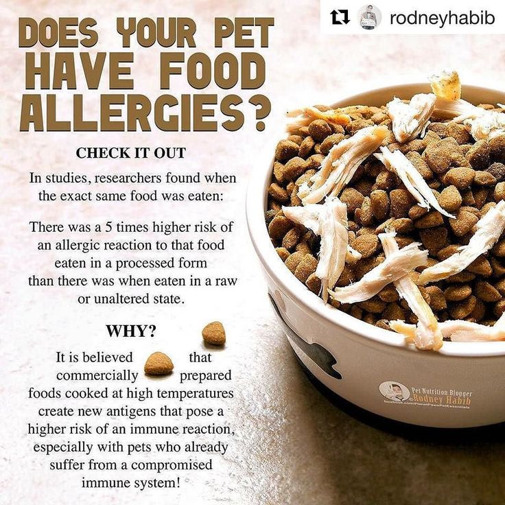 #Repost @rodneyhabib with @repostapp  DO YOU OWN A PET THAT SUFFERS WITH FOOD ALLERGIES?  Perhaps you fed your pet a bag of chicken kibble and they didnt fair so well. Before giving up completely on that protein source for the rest of your pets life have you ever tried feeding it in a clean fresh state?  Check out the following study: Compared to raw food antigens IgE antibodies showed a 38-fold increase against processed food antigens in 31% of the patients. Similarly IgG IgA and IgM…