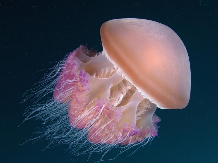 264 Best Ocean Wonders Images On Pinterest Photos Of Underwater